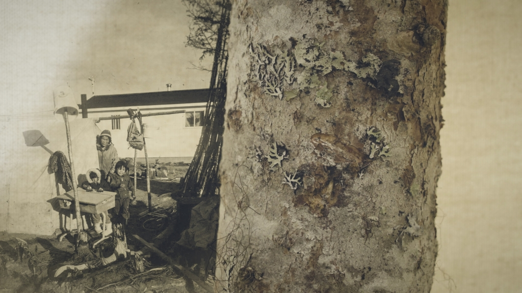 Image of archival photo and tree trunk